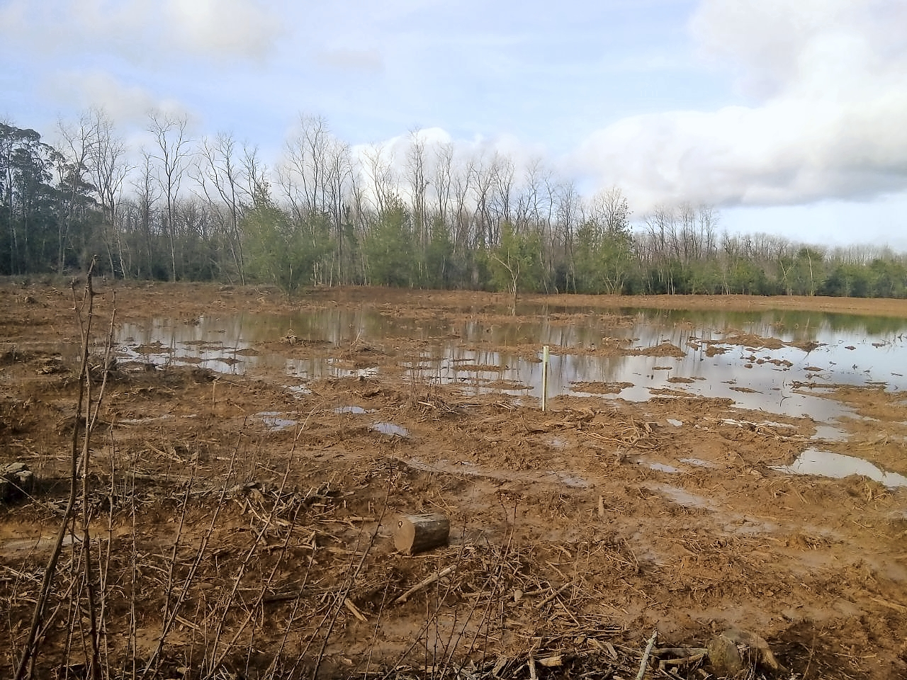 Podemos denunciará la restauración ambiental de Morero