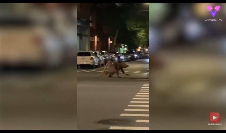 Captan a hombre 'rata' cruzando una calle de Nueva York