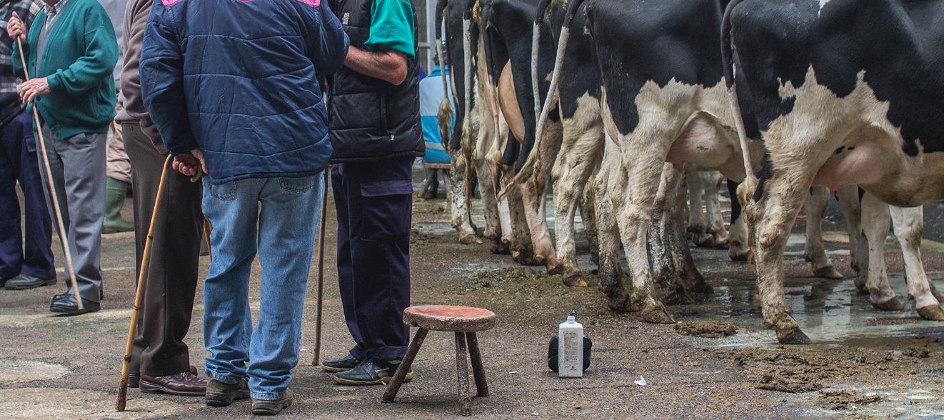 La Feria ganadera sin cambios con repetición de recría y leche