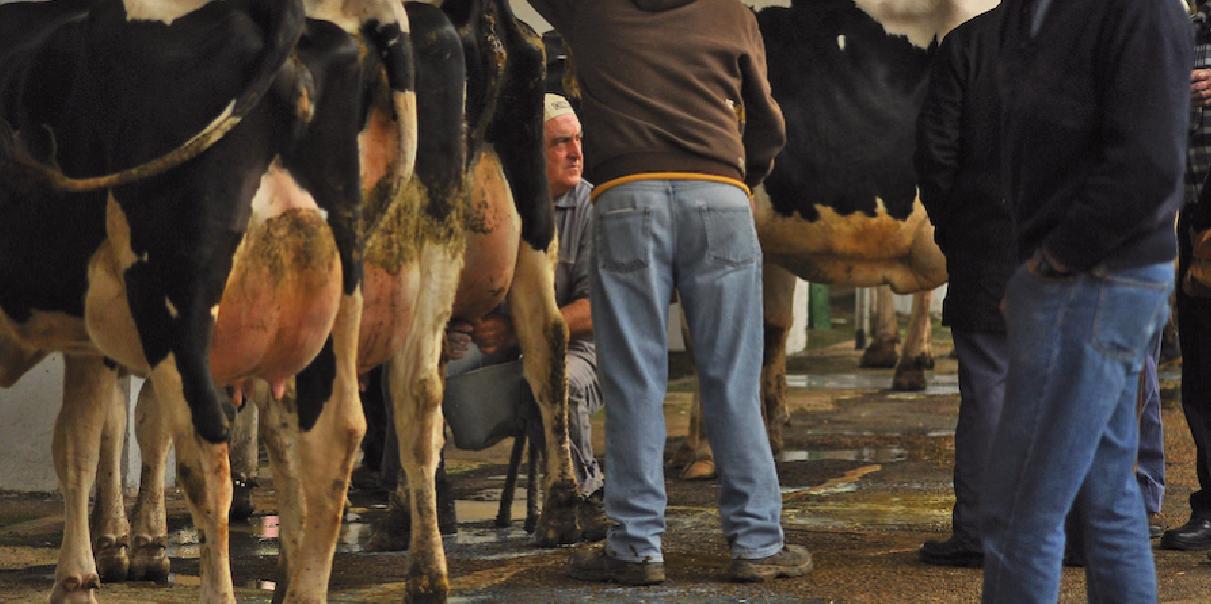 Una feria irregular con dificultades para la recría  y el sector lácteo