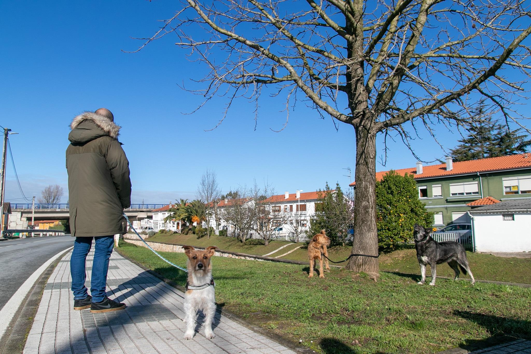CANTABRIA.-El TSJC desestima un recurso que pretendía impugnar la Ordenanza de Bienestar Animal de Polanco