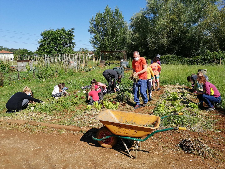 Las huertas municipales de Camargo acogieron talleres de agricultura ecológica en los que participaron 17 familias